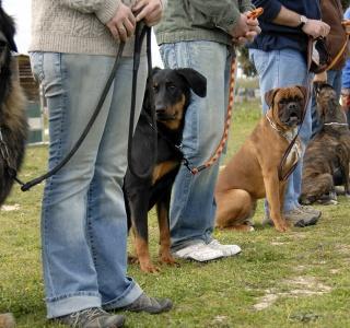 Grupowe szkolenie podstawowe psa towarzyszącego