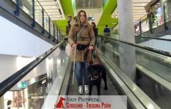 pies_przewodnik_06
