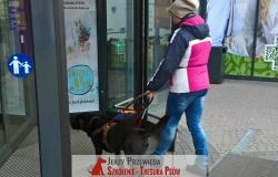 pies_przewodnik_17