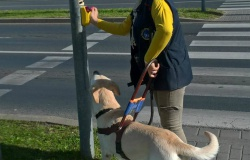 pies_przewodnik_23
