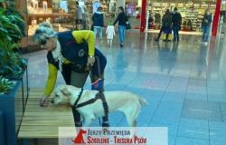 pies_przewodnik_24